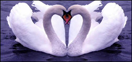 Love Heat Swans Google Homepage