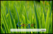 Green Grass Google Homepage